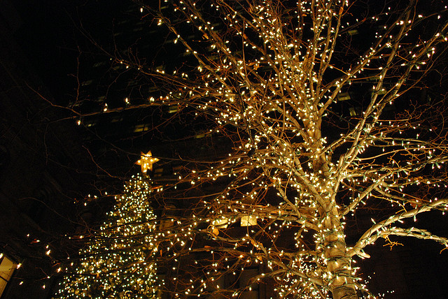 Holiday Lights 1